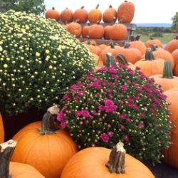 Fall Festivals Near Albany New York