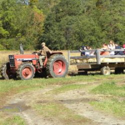 Hay Rides in the Fall