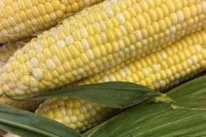 Locally grown corn